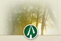 Impact for Living Logo